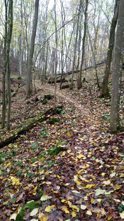 Herrliche Waldwege in Richtung Wittingen (raschel, raschel...)
