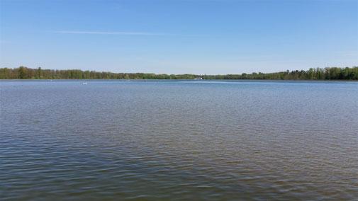 Die Donau bei Lauingen ist ca. 400 - 500 m breit...