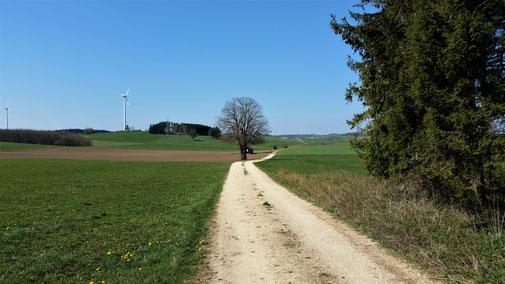 Blick in Richtung Oberdrackenstein