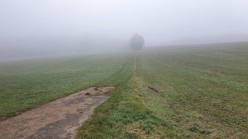 ln den Feldern vor Oberdrackenstein... sehr nebulös...
