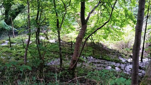 Ein Feuchtgebiet im Wald...