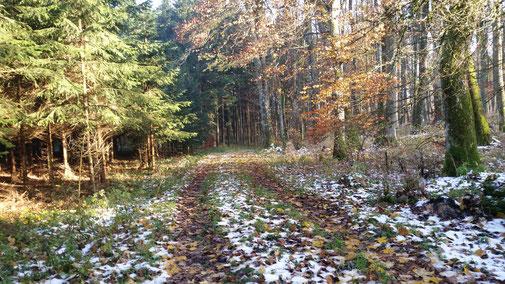 Ganz langsam legt sich die Kälte über die schwäbische Alb...