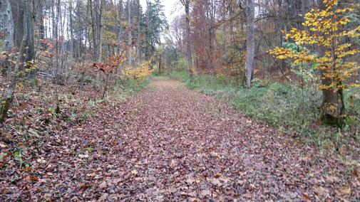 Heute gibt es viele weiche und raschelnde Blätterteppiche...