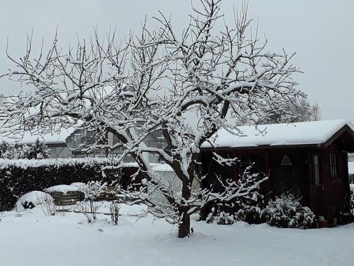 Ob der Pflaumenbaum nächsten Jahr wieder sein Bestes gibt?