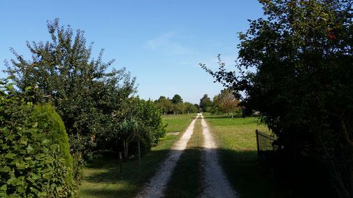 Die lange Gerade führt aus den Krautgärten....