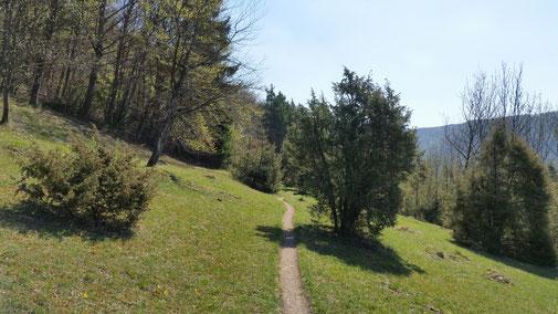 Meist sind die Trails einigermaßen eben - jedoch nicht immer...