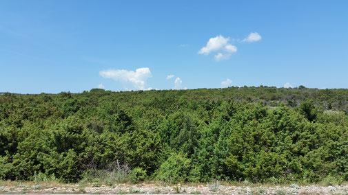 Die Büsche und Bäume sind steinalt - die meisten Büsche haben Dornen...