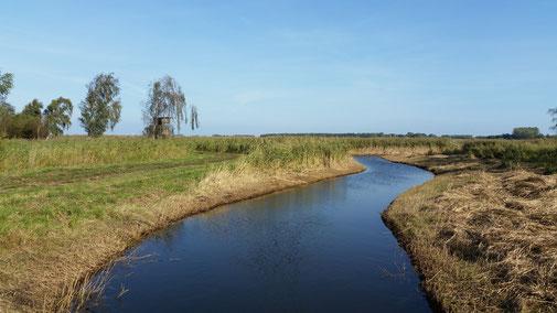 Durch die Salzwiesen zum Neuendorfer Wiek...
