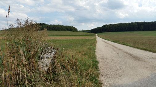 Vom Ditzenbacher Flugplätzle in Richtung Nellingen...