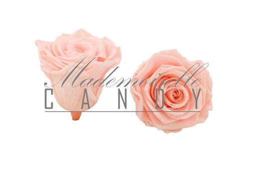 Mademoiselle Candy roses d'Equateur stabilisées