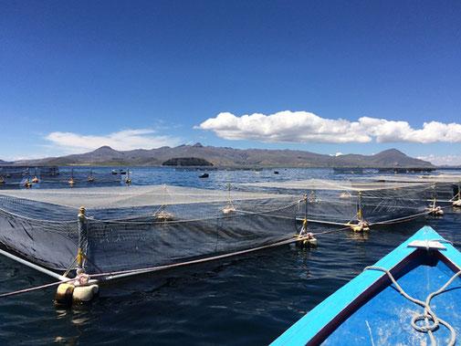 Balsas jaula, Lago Titicaca
