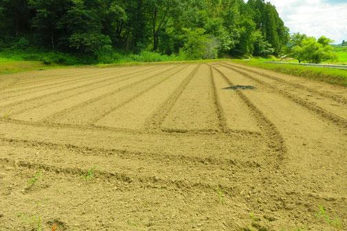 農地を保全管理