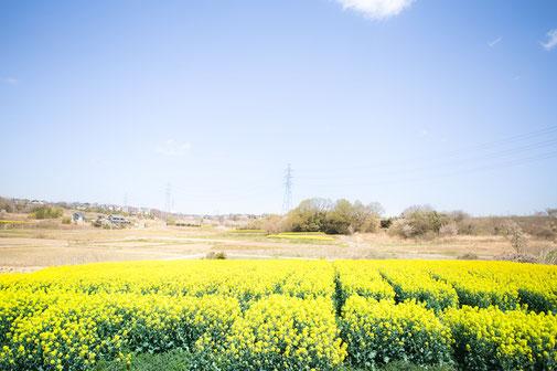 よみがえる「土」「農」「地域社会」をめざして―菜の花