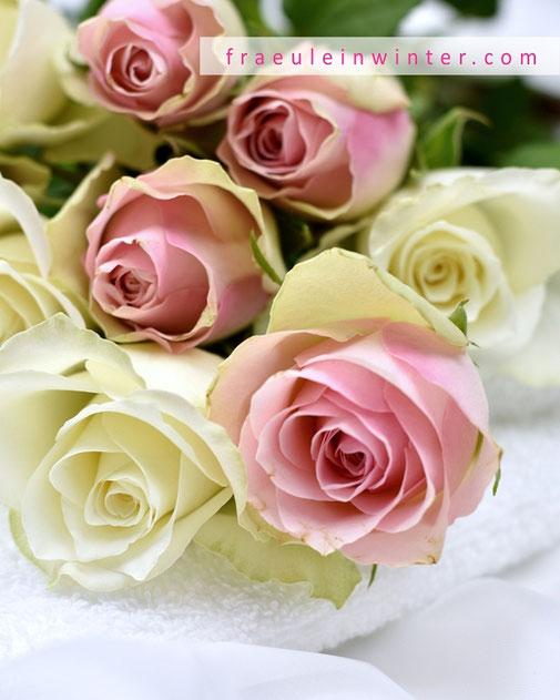 Weiße Rosen | Fraeulein Winter