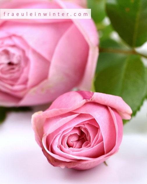 Rosen aus dem Garten.