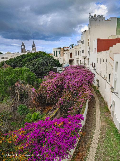 Grana Canaria Sehenswürdigkeiten Blumen