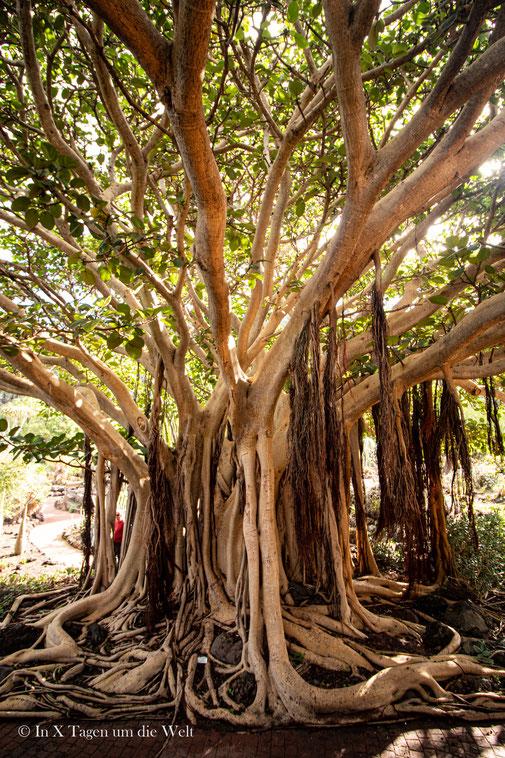 Gran Canaria Sehenswürdigkeiten Jardin Canario