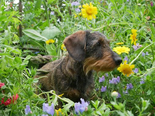 Anni mit Blumen geschmückt