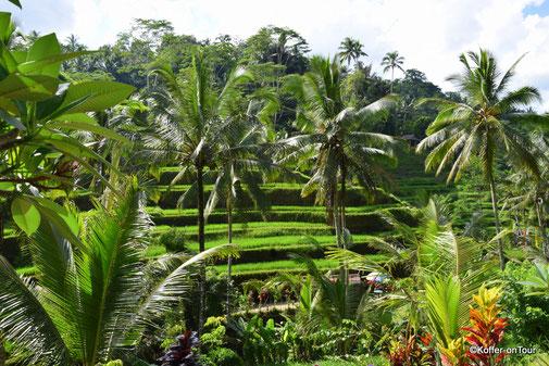 Bali, Reisfelder, Reisterassen, Indonesien