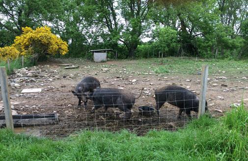Drei der tierischen Bewohner der Netherton Farm