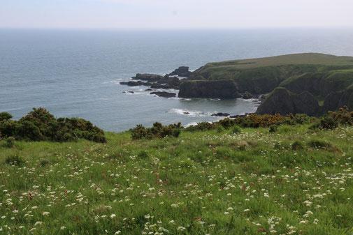 Die Definition von Grün. Was eine Küstenlandschaft!