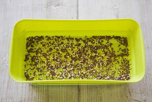 スプラウト専門容器は水を捨てる容器と種を止めておく網状の容器に分かれている