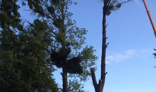 Baumfällung und Baumschnitt