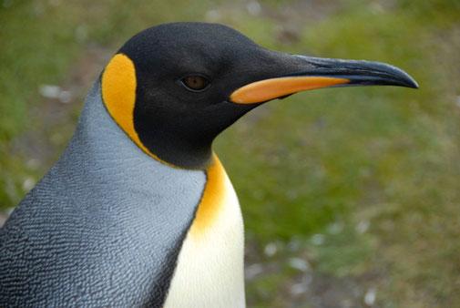 Pepamobil Antarktis-Tour