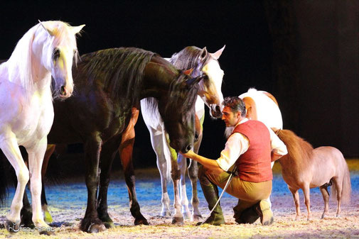 Pferde bei Kursen und Shows