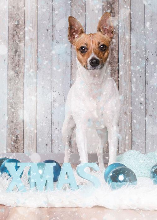 Xmas Dog Photo