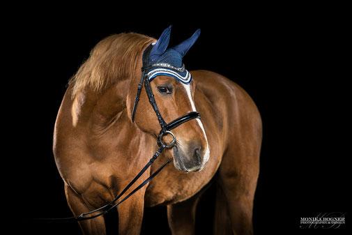 Bemützt Fliegenmützen Pferde im Studio