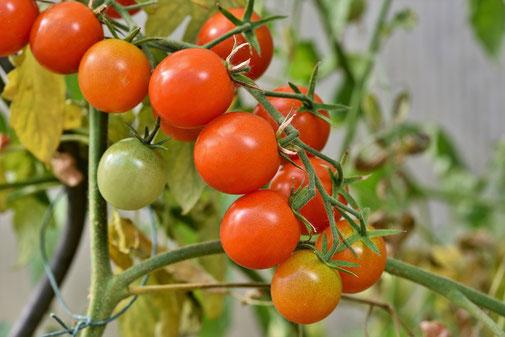 Nos plants de légumes