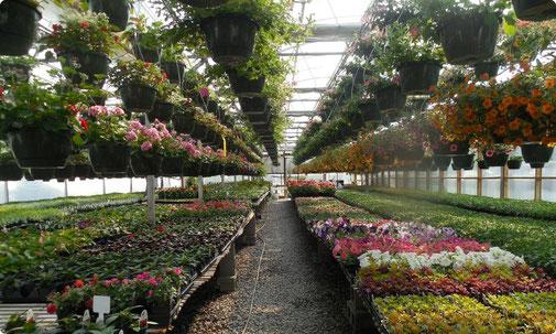 Gärtnereien in Aschaffenburg - Einkaufen in Aschaffenburg