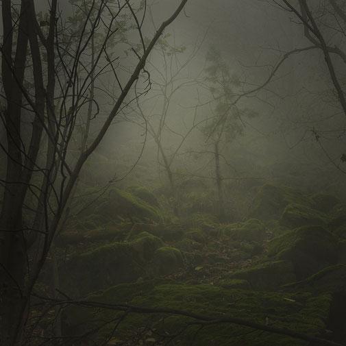 Forest II, 2013 - Ultrachrome K3 Pigmentdruck - Auflage 5 + 2 E.A. - 120 x 120 cm