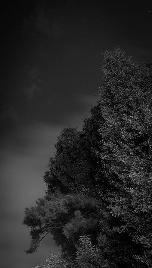 Forest IV, 2013 - Ultrachrome K3 Pigmentdruck - Auflage 5 + 2 E.A. - 140 x 140 cm