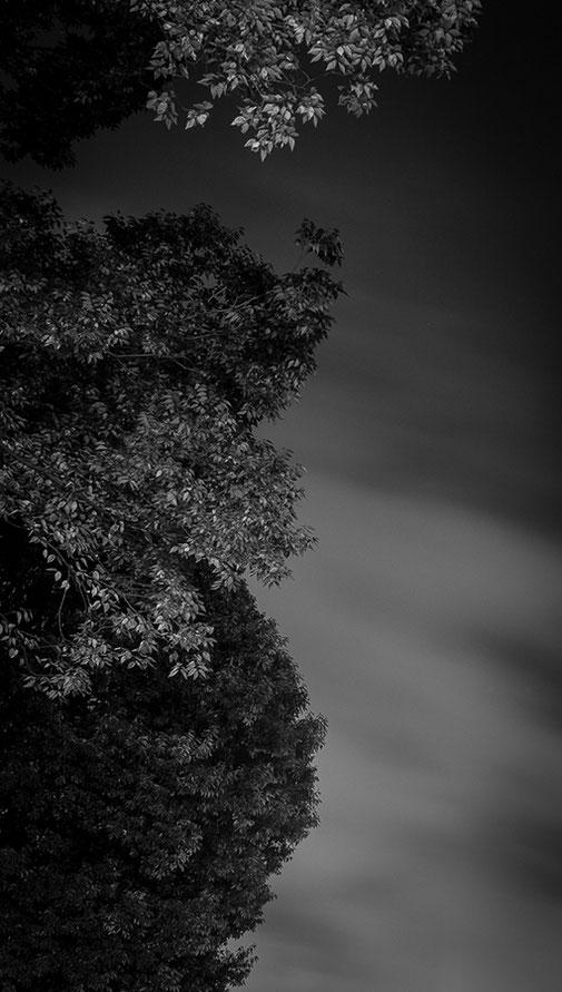 Forest III, 2013 - Ultrachrome K3 Pigmentdruck - Auflage 5 + 2 E.A. - 100 x 100 cm