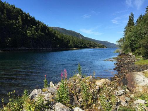 Lachs angeln Norwegen, in großen Flüssen, in Straumen in Meeresbuchten mit Fliege und Blinker, hier Meeresbucht mit Lachs
