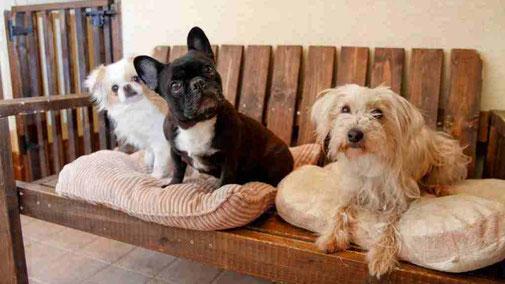 ペットも一緒にタイムシェア別荘のプルミエデュオ旧軽井沢倶楽部
