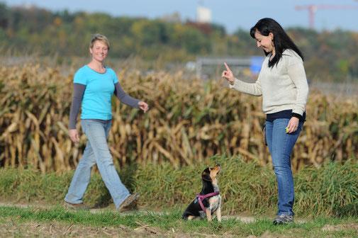So klappen alle Begegnungen zwischen Hund und Mensch