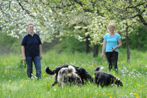 Mels Hundeausbildung - Mels Hundeausbildung - Premium Hundeschule