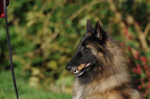 Mels Hundeausbildung - Anti-Giftköder-Training - Premium Hundeschule