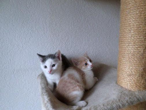 Gino & Gipsy als Babies ...
