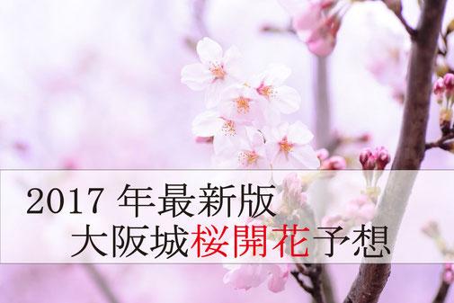 大阪城桜開花予想