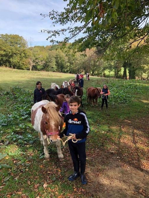Allons chercher les poneys au pré !!