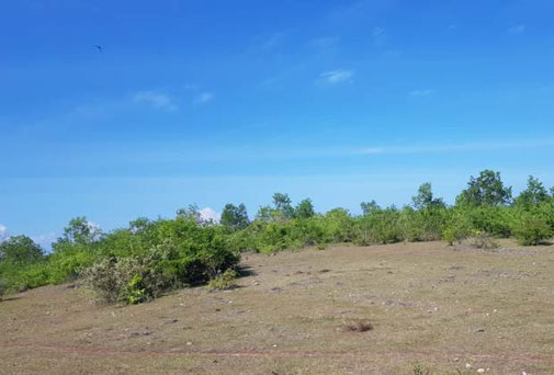 Bukit land for sale by owner in Ungasan