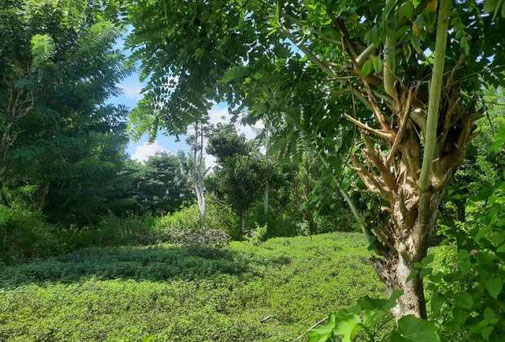 Bukit land for sale in Ungasan