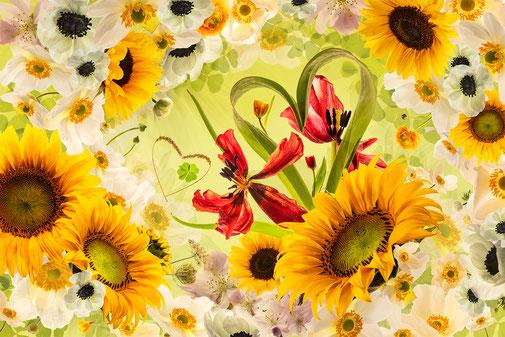 Fotokunst - Ralf Kämper - rk-insights - Blumen - Blüten - digital Art - Tulpe - Herz - Sonnenblume - Klee - Glück - Ranunkel - Anemone - Herbstanemone