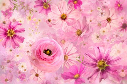 Fotokunst - Ralf Kämper - rk-insights - Blumen - Blüten - digital Art - Anemone - Ranunkel - Klee - Cosmea - Schmuckkörbchen