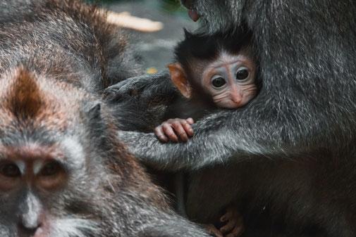 Affenbaby im Arm der Mutter