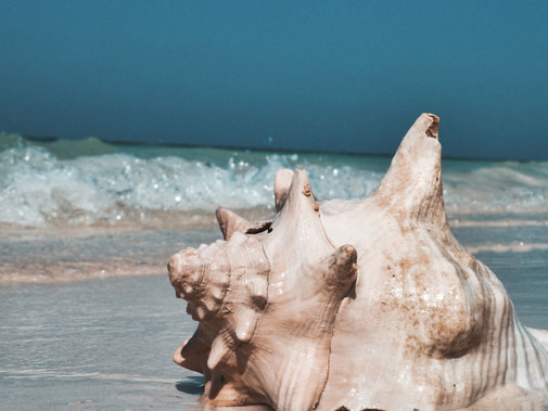 Große Meeresmuschel am Strand. Im Hintergrund das Meer mit Welen.